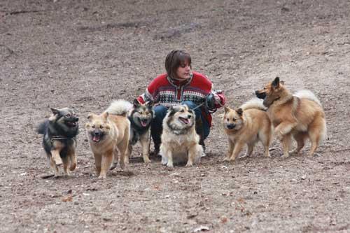 Van links naar rechts: Tryggur, halfbroertje van Tryggur, Ronja, Mayla, Knus en Bayuk.